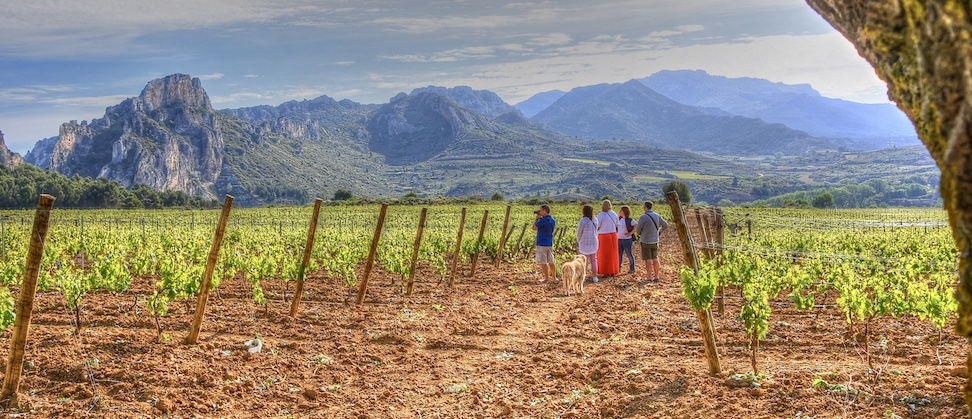 Tours en Ribera del Duero y Rioja