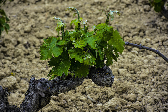 Ruta del Vino de Ribera del Duero desde Valladolid