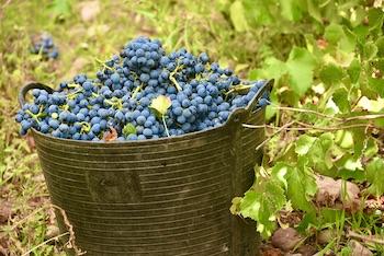 Ribera Duero Wine Tour